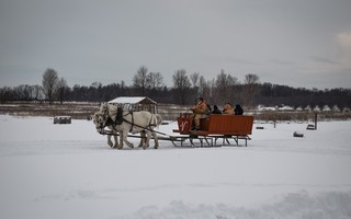 Picture of Percheron Sleigh Ride