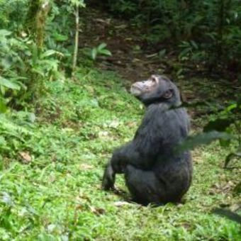 Picture of The Week-long Gorilla Tracking tour of Rwanda
